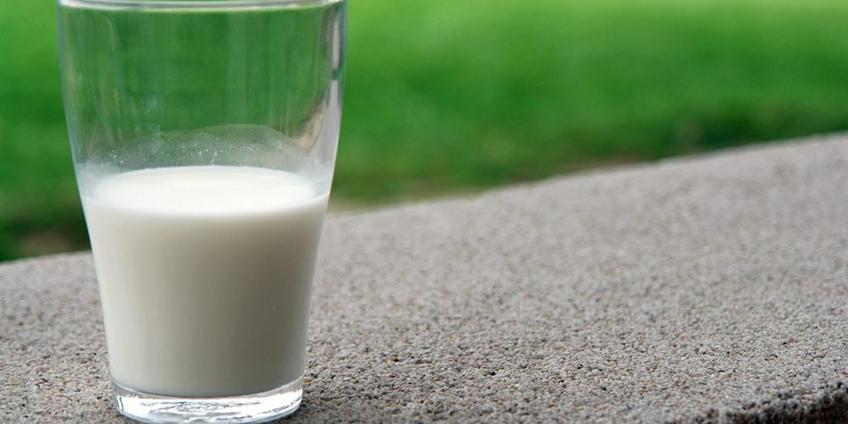 How Probiotics Help Improve Your Immune System
